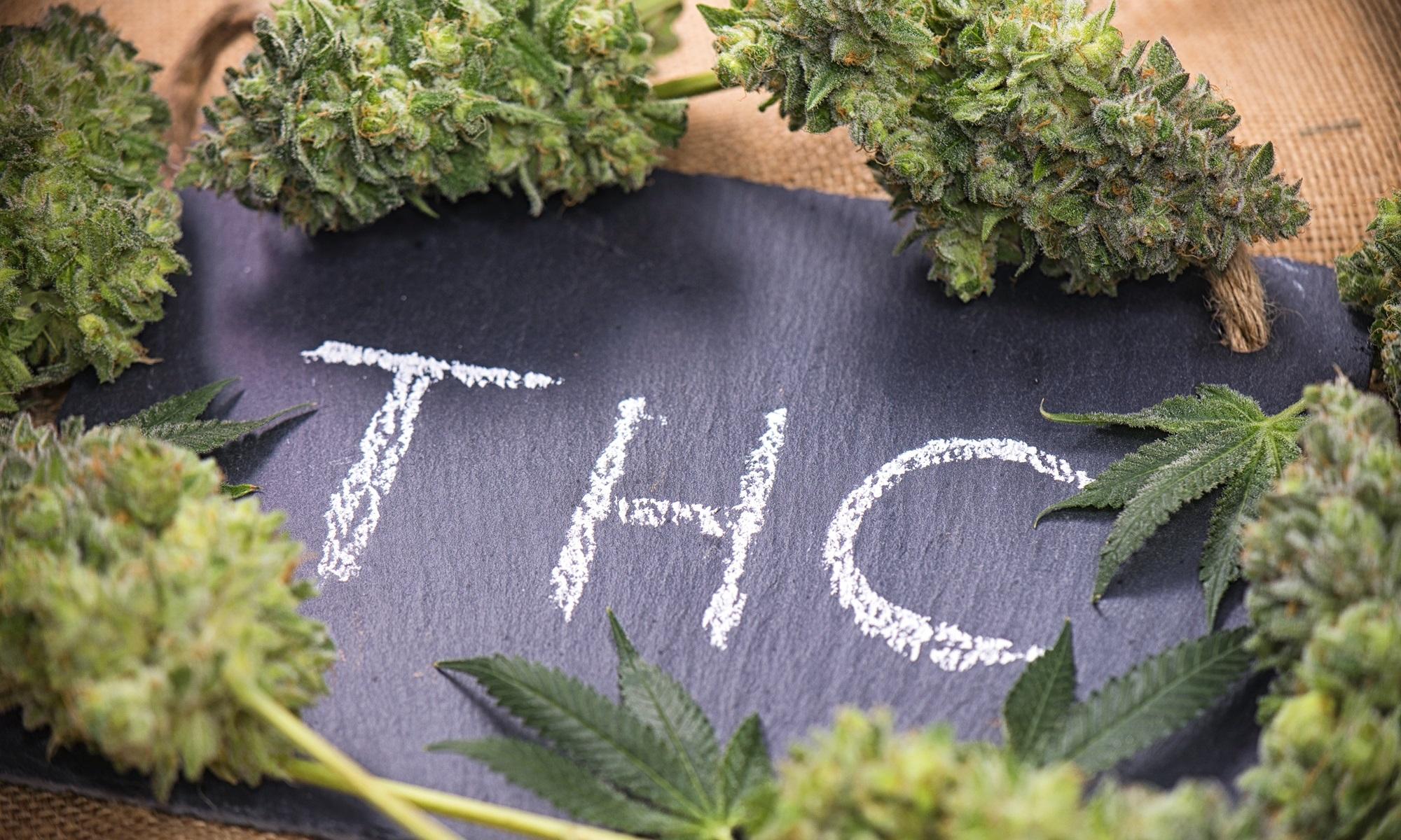 El cannabis medicinal, ¿qué cura?