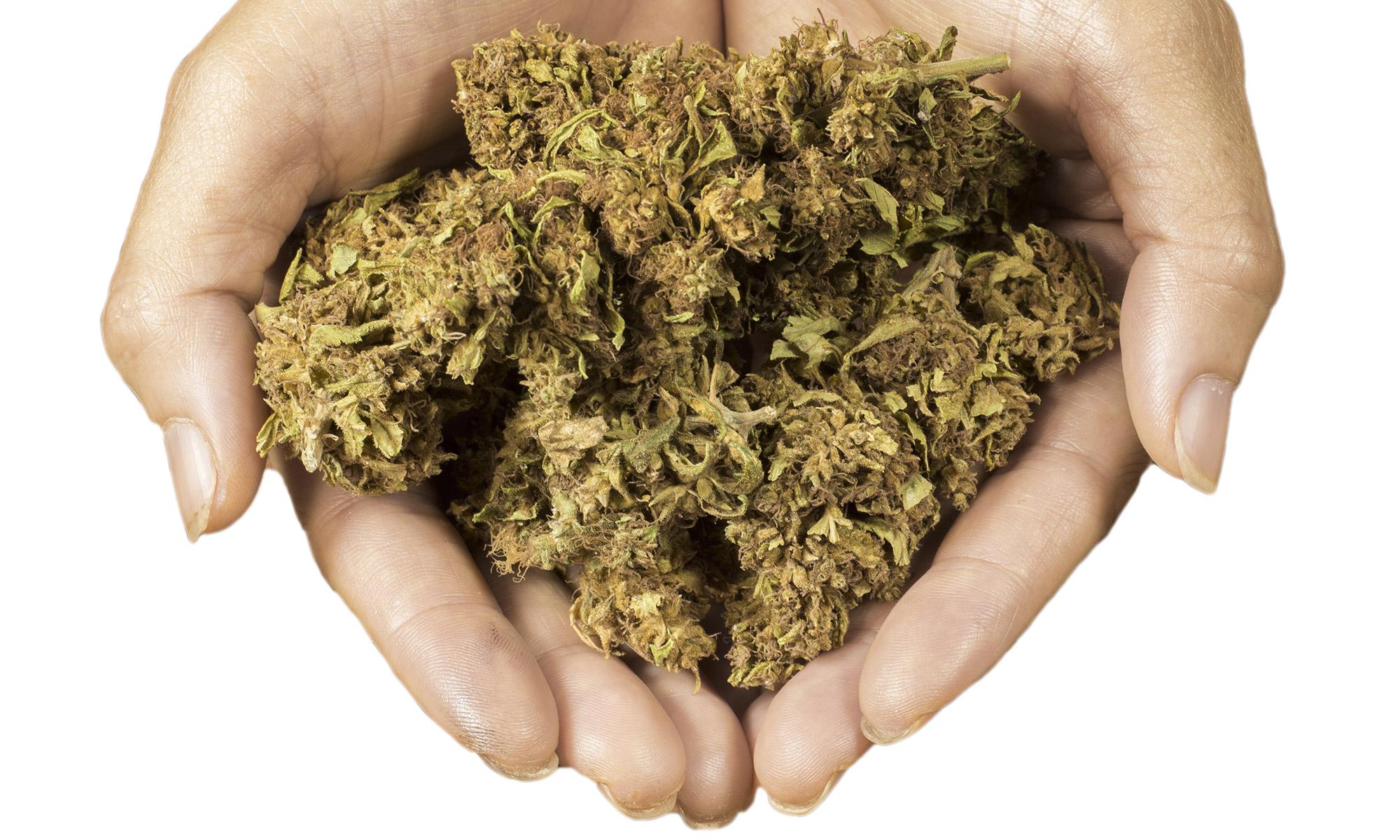 El blog de la Marihuana: marihuana.blog